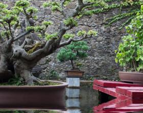 Feng Shui Garten mit Bonsai