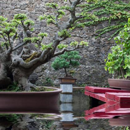 Mit dem Feng Shui Prinzip Harmonie im Garten schaffen