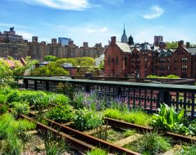 Blick auf New York vom Community Garten