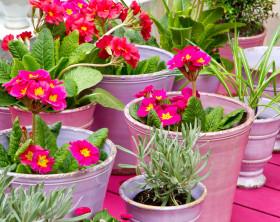 Blumentoepfe in Pink auf dem Balkon