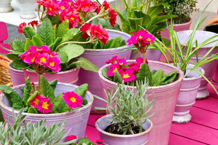 Pinke Blumentöpfe Auf Dem Balkon