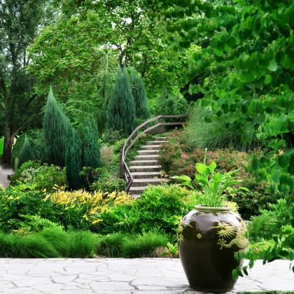 Gartendesign Natur Pur Bäume Und Sträucher