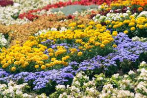 Organische Formen beim Blumenbeet