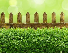 Alter verwitterter Gartenzaun mit Buchsbaumhecke und Bokehhintergrund