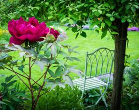 Gartenidyll mit Päonie