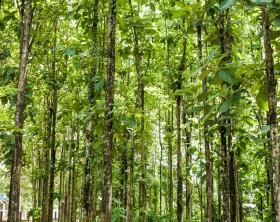 Das Wunderholz Teak: exotisch, bildschön, langlebig