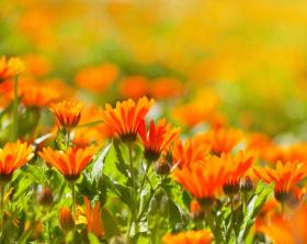 Der Klang der Farbe: Kleine Farblehre für Gartengestalter