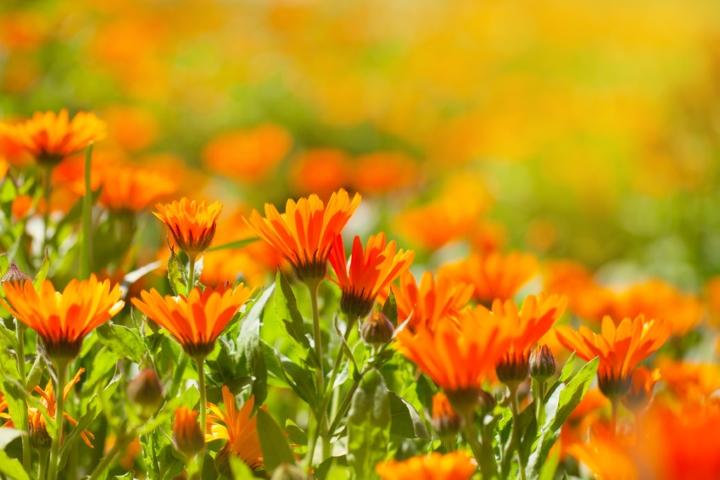 Der Klang der Farbe Kleine Farblehre für Gartengestalter