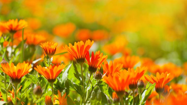 Blütenmeer im Sommer