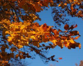 Herbstlaub: Die bunte Blätterpracht sinnvoll nutzen