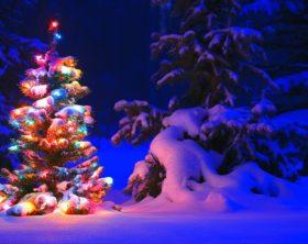 Weihnachtsparadies im Garten