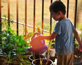 Gartenarbeit lohnt: im Winter, Frühling, Sommer & Herbst