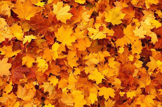 Gartenarbeit Herbst