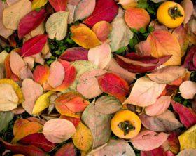 Pflanzen im Herbst:Was kommt wann in die Erde?